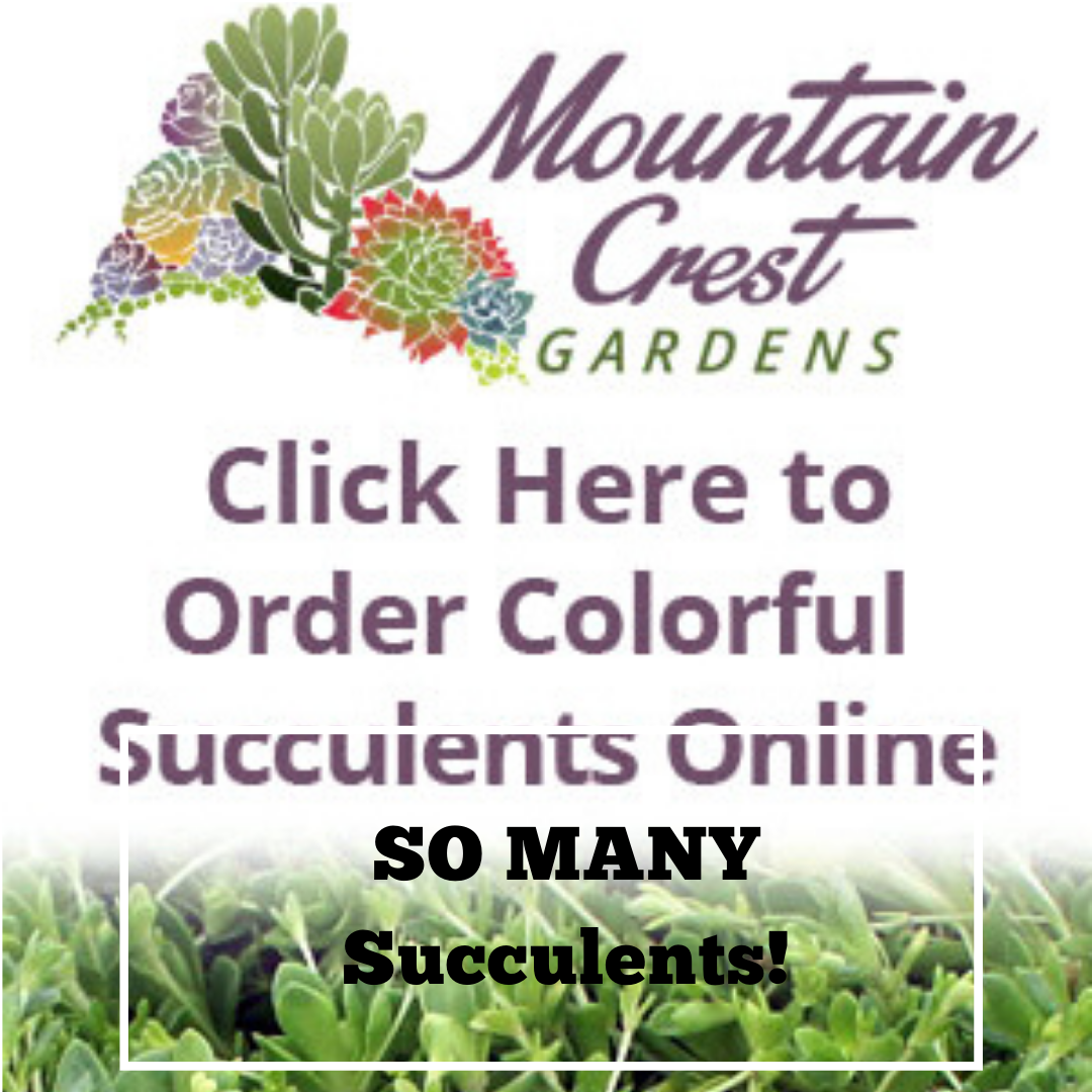 Copy Of The Secret Sale